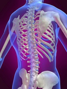 Spine Torso
